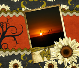 Pretty Sunset Wallpaper Download - White Sunflower Background