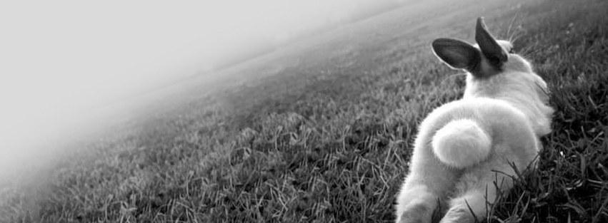 Bunny In Grass Facebook Timeline Cover