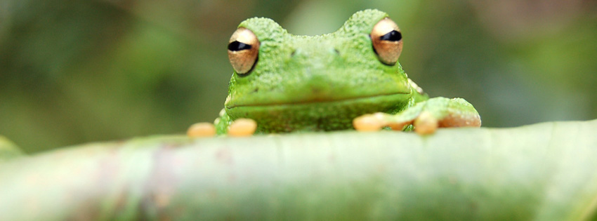 Green Frog Facebook Cover