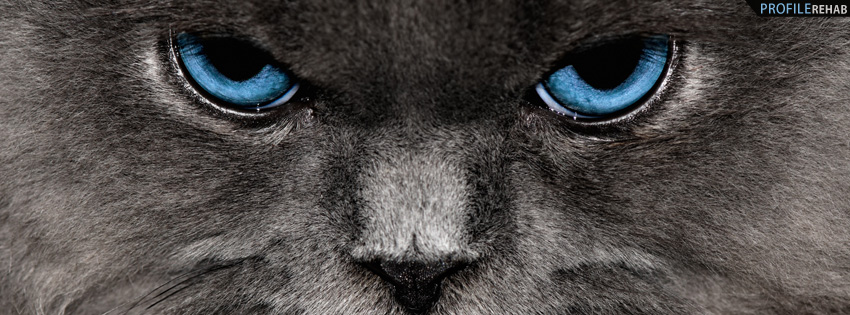 Gray Cat with Blue Eyes Facebook Cover