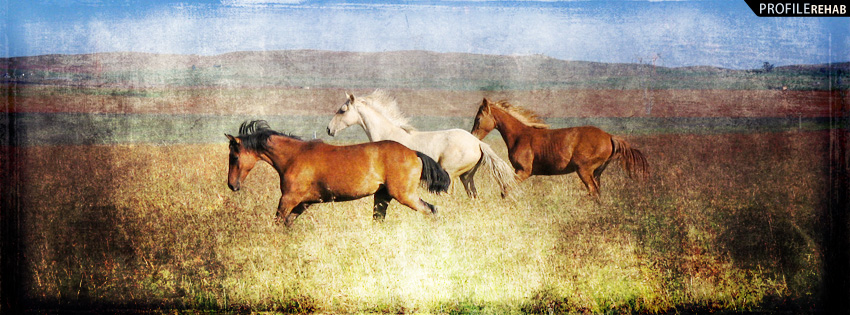 Cool Horses Facebook Cover