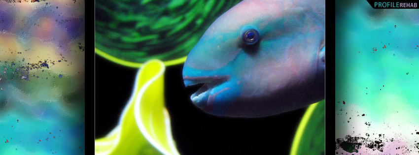 Tropical Fish Facebook Cover