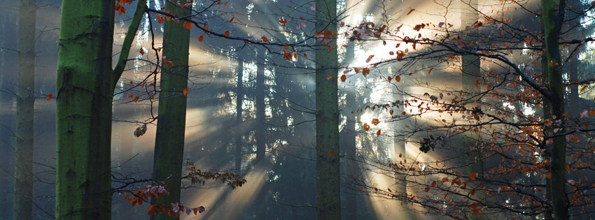 Fall Trees in Forest Facebook Cover - Beautiful Fall Pictures - Pretty Fall Day Preview