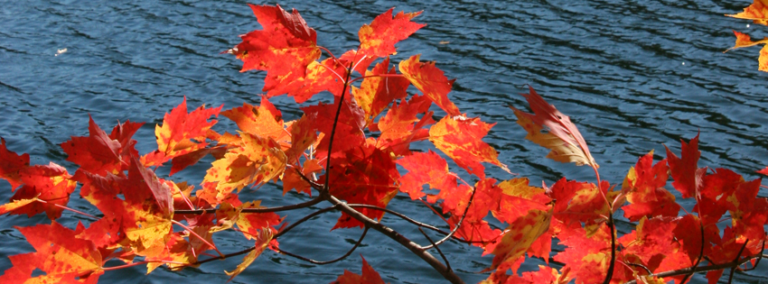Red Autumn Leaves Cover for Facebook Timeline - Pretty Fall FB Cover