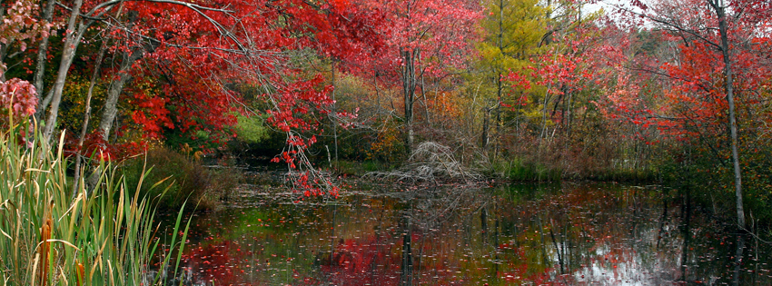 Fall Pond Facebook Cover - Colorful Trees in Autumn - Fall Landscapes Pics