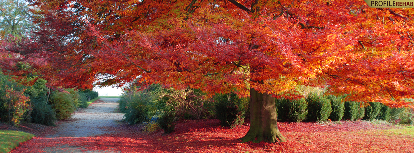 Beautiful Autumn Tree Cover for Timeline - Best Fall Pictures - Facebook Covers Autumn
