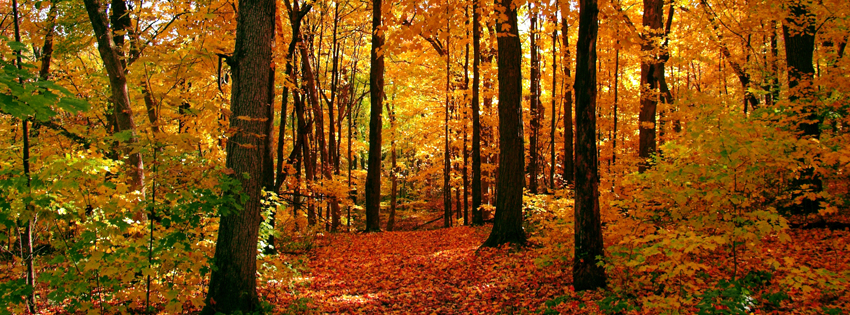 Fall Forest Facebook Cover - Beautiful Fall Scenes Images - Amazing Fall Days Pictures