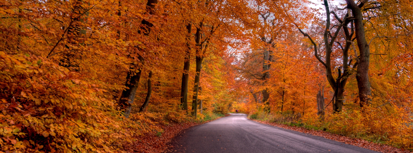 Fall in Denmark Facebook Cover Preview