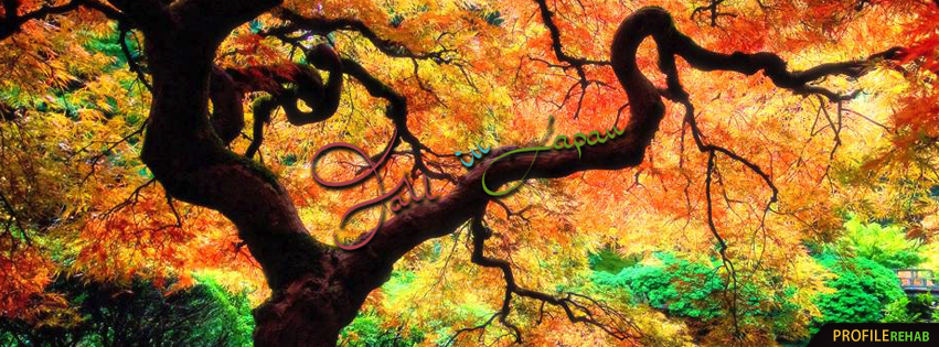 Amazing Fall in Japan Image - Japanese Maple Tree Images - Autumn Fall Photos
