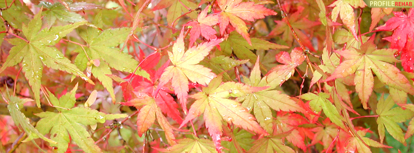 Green and Red Autumn Leaves Facebook Cover - Autumn Photography Preview
