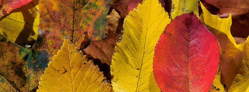 Colorful Autumn Leaves Facebook Cover - Facebook Fall Cover Photos