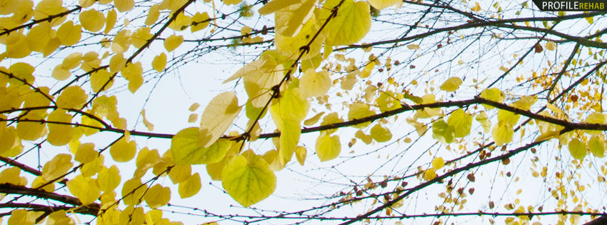 Yellow Fall Leaves Facebook Cover
