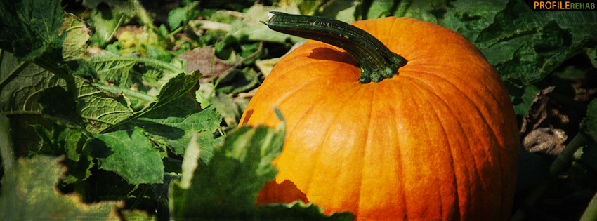 Fall Pumpkin Facebook Cover - Fall Pumpkin Pictures - Pumpkin Pics for Fall