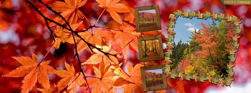 Autumn Scenery Facebook Cover - Orange Trees Images - Orange Leaves Pictures