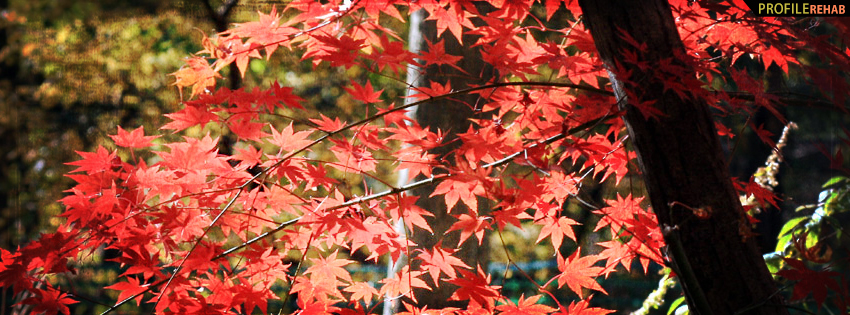 Fall Tree Facebook Cover - Fall Photography Facebook Cover Photos for Fall