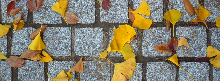 Autumn Leaves Fallen on Stones Facebook Cover - Fall Facebook Cover Photo Preview
