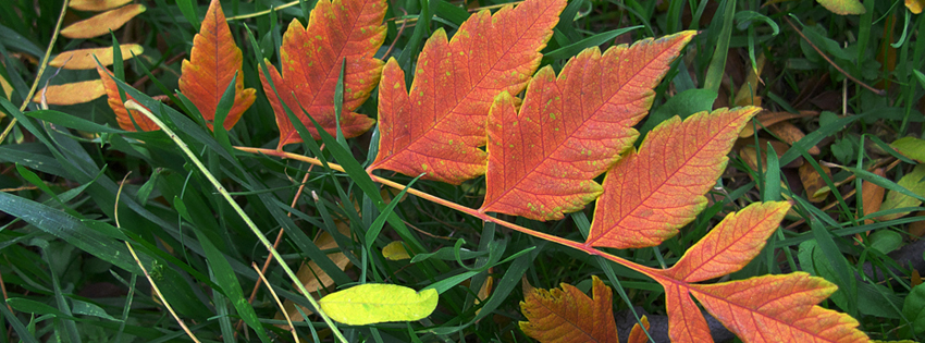 Unique Leaves Facebook Cover - Beautiful Fall Photos Free - Best Autumn Pics