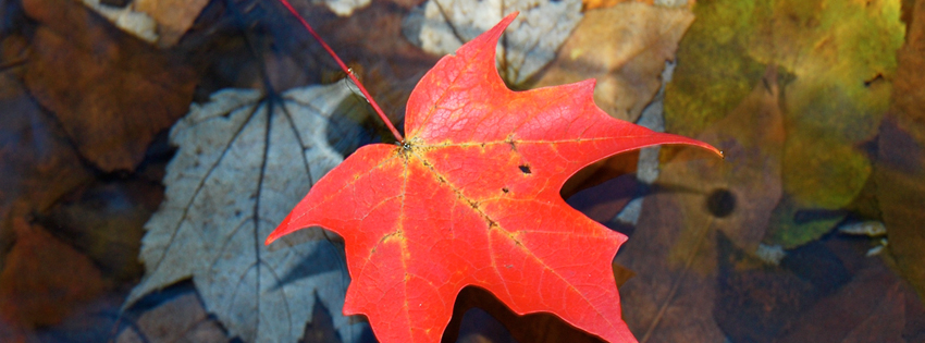 Red Autumn Leaf Facebook Cover - Facebook Cover Photos Fall - Fall Background Images