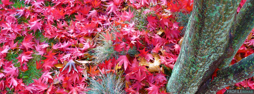 Red Fall Leaves Facebook Cover - Fall Photos for Facebook Cover - Cool Fall Pictures