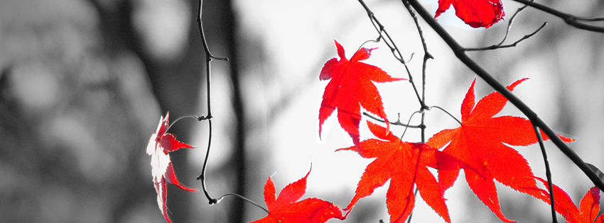 Black and White Autumn Facebook Cover with Red Leaves - Fall Images for Facebook