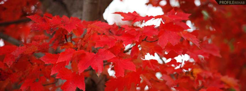 Red Fall Leaves Timeline Cover - Beautiful Picture of Fall Leaves