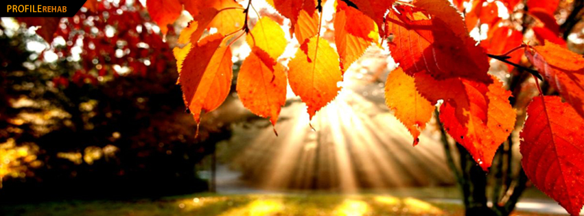 Amazing Red Leaves Facebook Cover - Beautiful Autumn Season Pictures