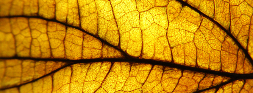 Yellow Leaf Facebook Cover - Yellow Leaves Images - Fall Timeline Covers