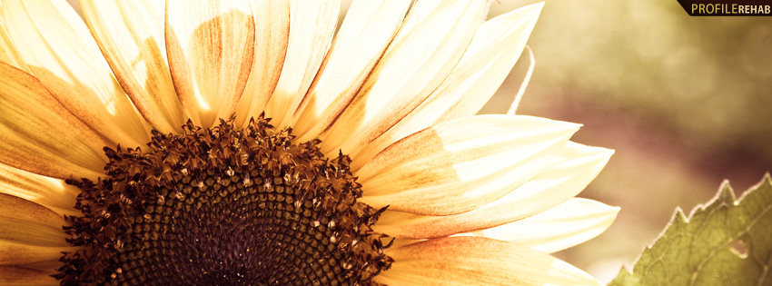 Beautiful Sunflower Photography Facebook Cover