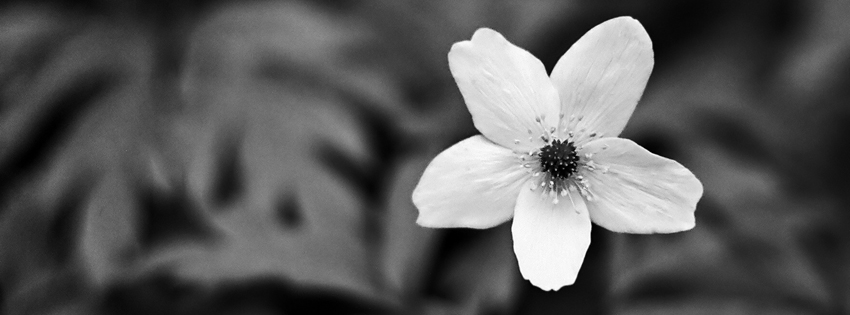 Black & White Flower Facebook Cover for Timeline