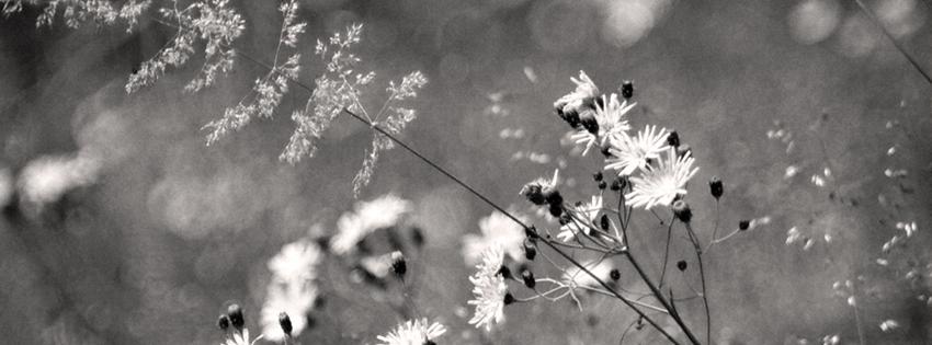 Black & White Flowers Cover for Facebook Timeline