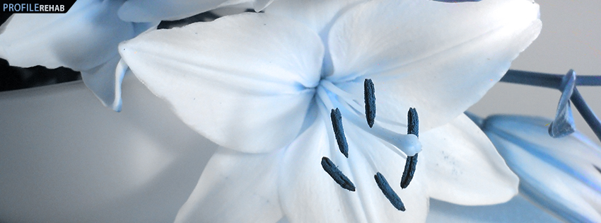 Black and White Lily Facebook Cover