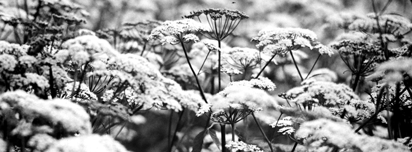 Black & White Snow on Flowers Facebook Cover