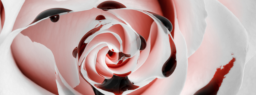 Bloody Rose Facebook Cover