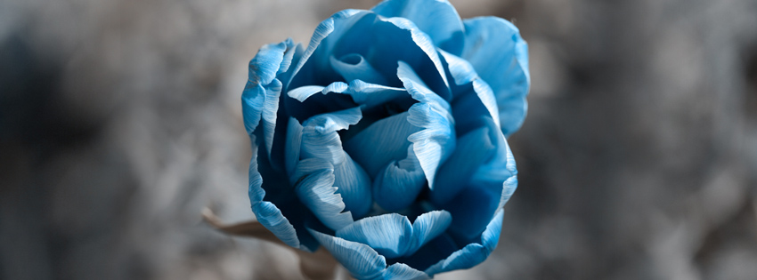 Blue Flower Facebook Cover