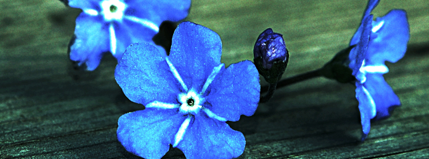 Blue Grunge Flower Facebook Cover