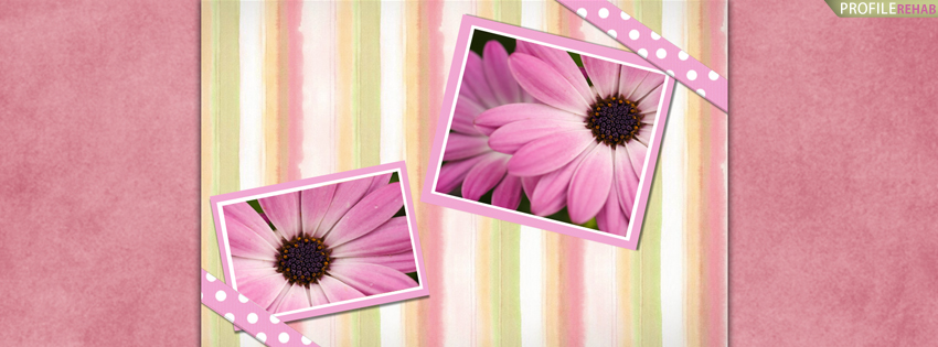Pretty Gerbera Daisies Facebook Cover for Timeline