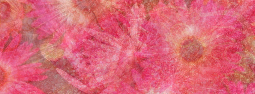 Hot Pink Daisies Facebook Cover