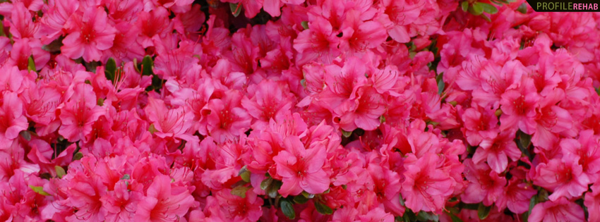 hot pink flower facebook cover, Natural flower