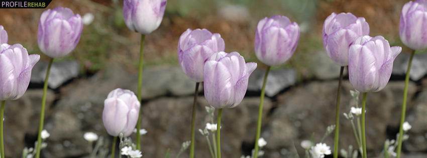 Lavender Tulips Facebook Cover