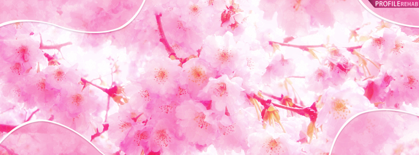 Pink Cherry Blossoms Facebook Cover - Pictures of Springtime