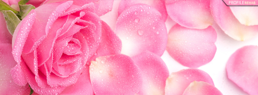 Hot Pink Rose Facebook Cover - Rose Flower Pictures
