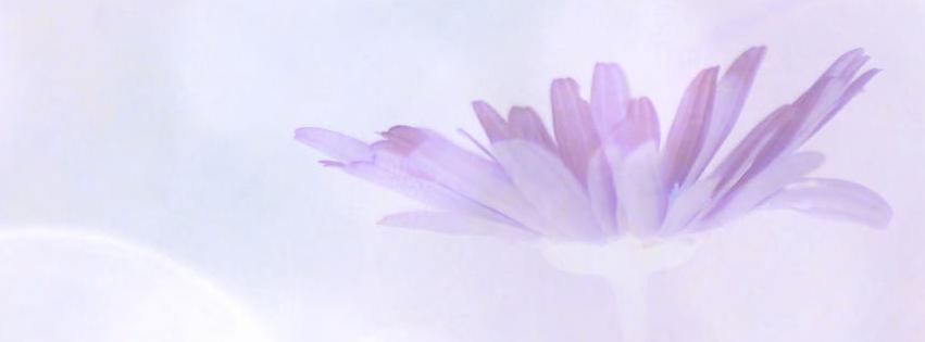 Lavendar Daisy Facebook Cover