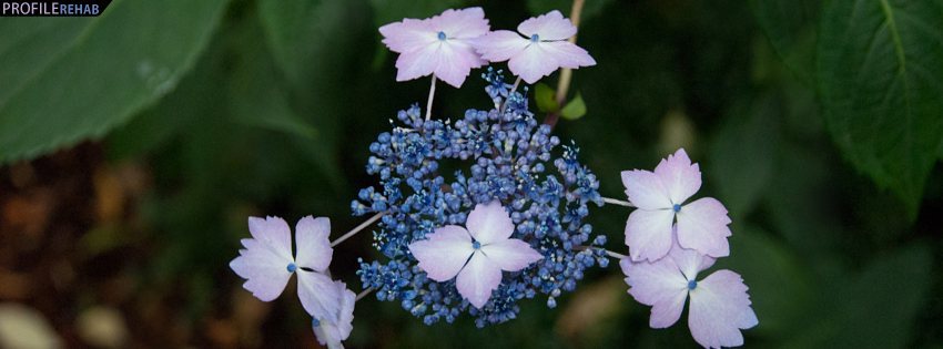 Purple Flowers Facebook Cover Preview