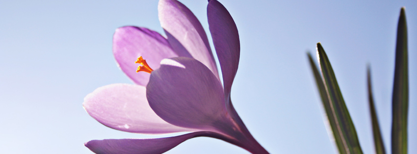 Purple Flower Timeline Cover for Facebook