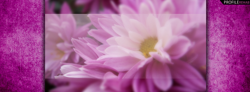 Purple & Pink Flower Cover for Facebook Timeline