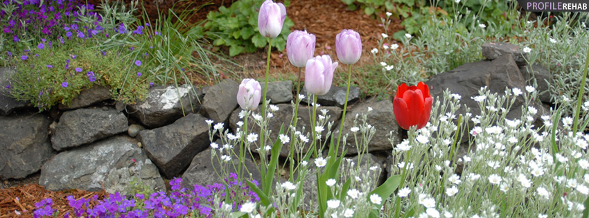 Lavendar Tulips Flower Garden Facebook Cover