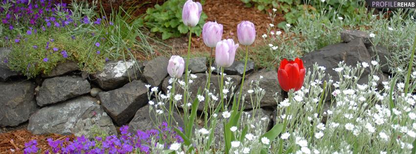 Lavendar Tulips Flower Garden Facebook Cover
