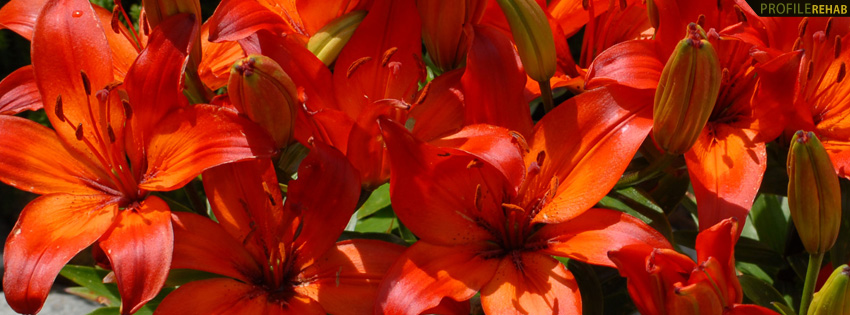 Red & Orange Lilies Facebook Cover
