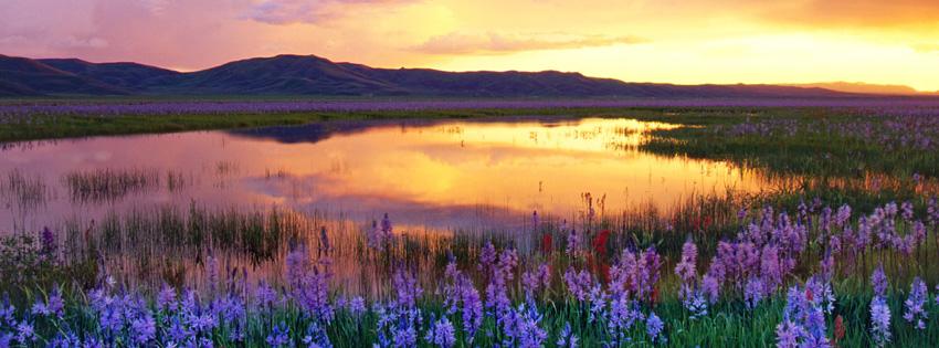 Beautiful Sunset over Purple Flowers Facebook Cover