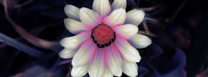 Unique White Flower Facebook Cover
